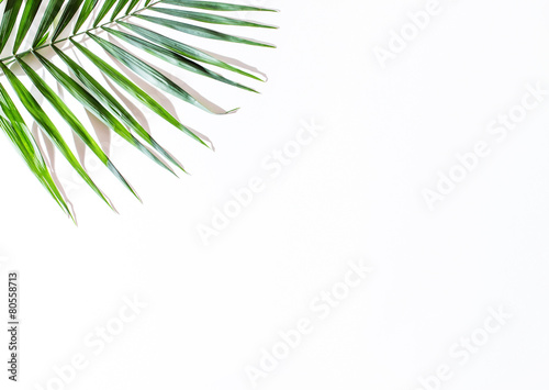 Aluminium Palm boom areca palm leaves