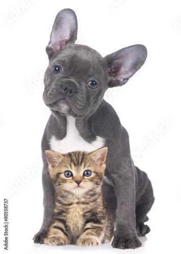 Foto op Canvas Tijger Junge Katze mit Welpe