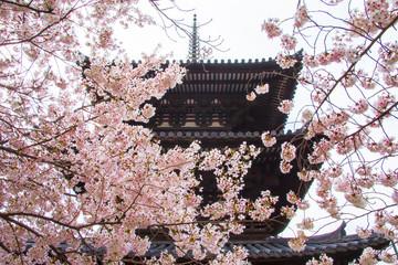 東大寺三重塔と桜