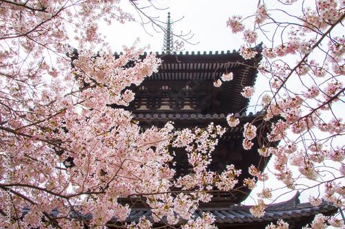 Keuken foto achterwand Kersen 東大寺三重塔と桜
