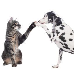 Hund und Katze geben Pfote High five