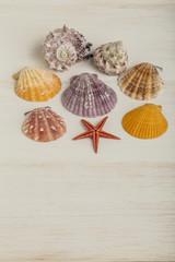 seashells on wooden surface