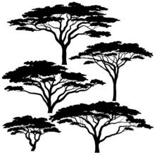 Acacia Tree Silhouettes Sticker