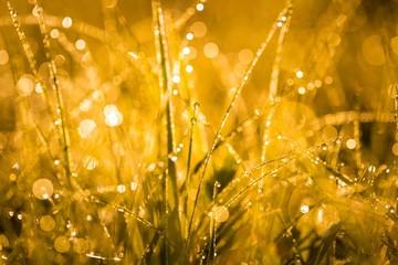 Wet morning grass