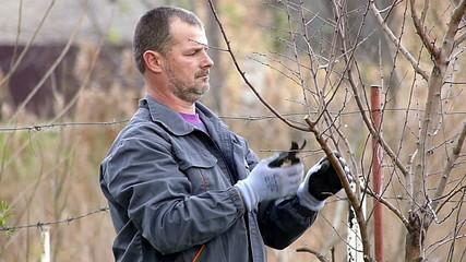 Winter fruit pruning.