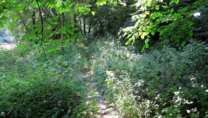 Footpath and butterflies flying over