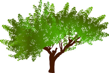 brown tree with green leaves isolated on white