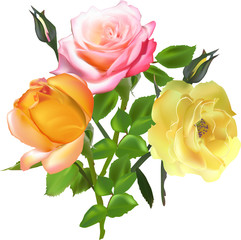 bunch of three isolated light color roses
