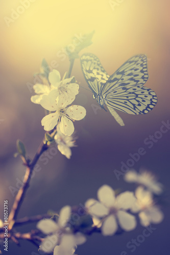 Pastel colored photo of butterfly and spring flowers - 80573716