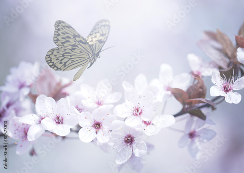 Pastel colored photo of butterfly and spring flowers - 80573910