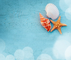 Seashell on the wooden blue background. Summer beach.