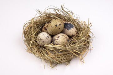 Nest with quail eggs isolated on the background