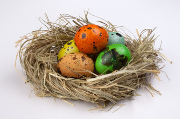 colored quail easter eggs in nest  isolated on white  background