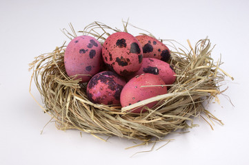 pink quail easter eggs in nest  isolated on white  background