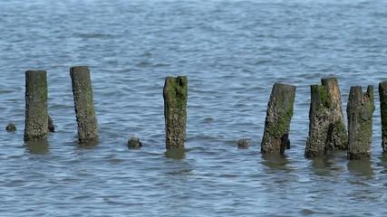 Holzpfähle im Meer