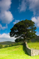 On the pasture in Yorkshire Dales National Park, Cumbria, Englan