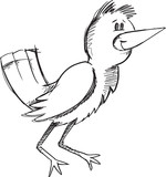 Doodle Sketch Bird Vector Illustration Art