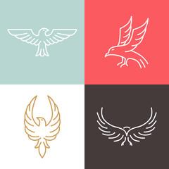 Vector eagle and falcon linear logos