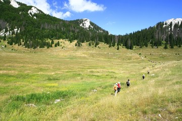 Hiker's line on the mountain meadow