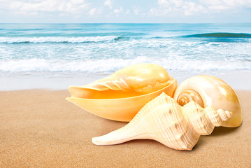 Sea shell at beach