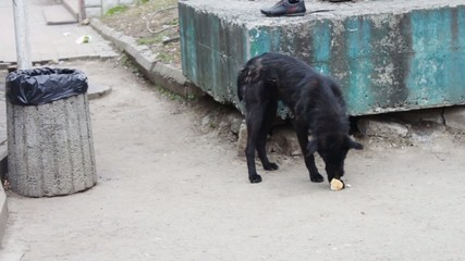 Mongrel dog eats food on the street