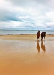cavalgada na praia