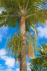 floraison de palmier
