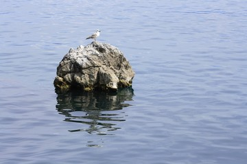 Seagull on the rock in the the sea