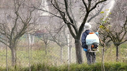 Winter protection of fruit trees by spraying