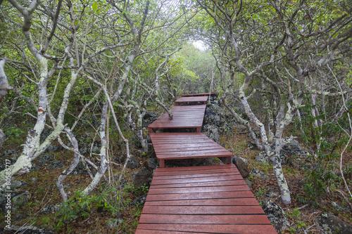 Leinwanddruck Bild Wooden path Galapagos