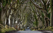 Leinwanddruck Bild - Dark Hedges, Northern Ireland