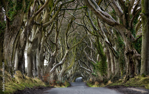 Leinwanddruck Bild Dark Hedges, Northern Ireland