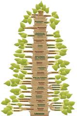 Human Evolution Phylogenetic Tree Of Life German