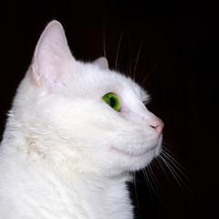 Katzenprofil, qu.