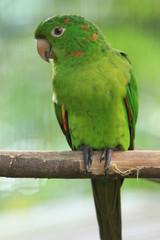 Guyane - Zoo - Aout 2014