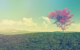 Fototapety Maple tree landscape with vintage effect