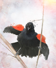 Red Winged Blackbird Watercolor