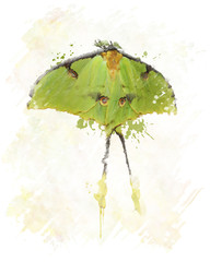 Luna Moth Watercolor