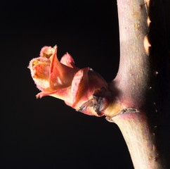 flower bud on a tree