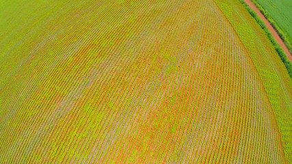 Aerial View from Soybean Plantation in Goias, Brazil