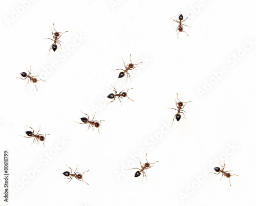 ants on a white wall. close-up - 80610799