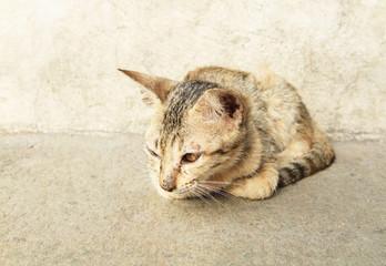 Portrait of dirty kitten on street