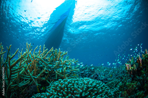 Tuinposter Duiken thousand fish below boat bunaken sulawesi indonesia diver