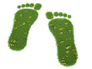 Green grass growing footprints