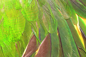 Green parrot's feather close up