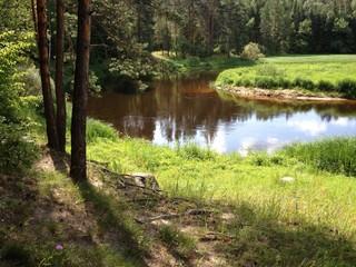 берег реки в лесу летним солнечным днем