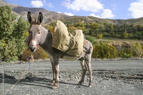 Fotobehang Ezel Donkey