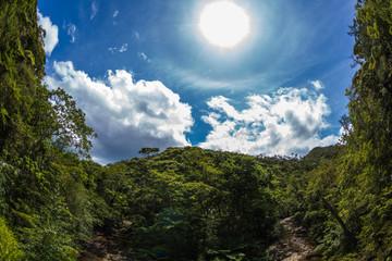 沖縄の夏山