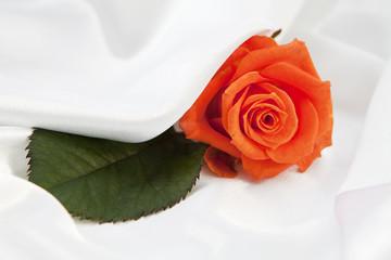 rose orange sur tissus de satin