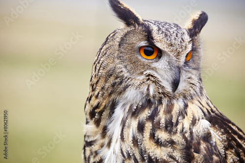 Aluminium Uil Eagle Owl/An eagle owl